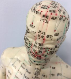 Model showing meridians and acupuncture points
